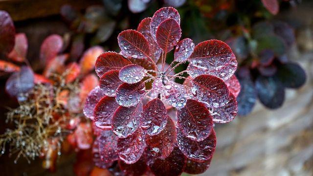 humedad en las plantas