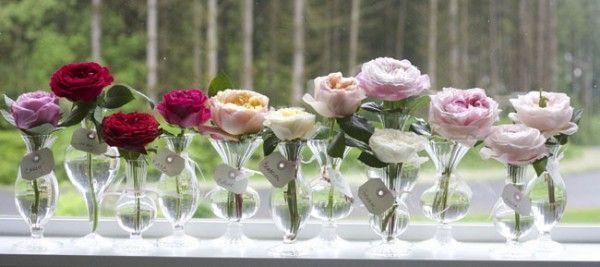 Rosas inglesas como flor cortada