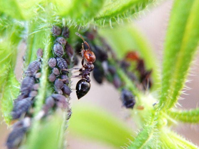 Remedios hormigas