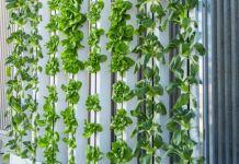 Problemas jardines verticales