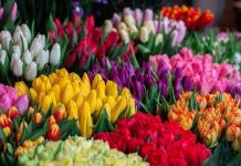Color flores