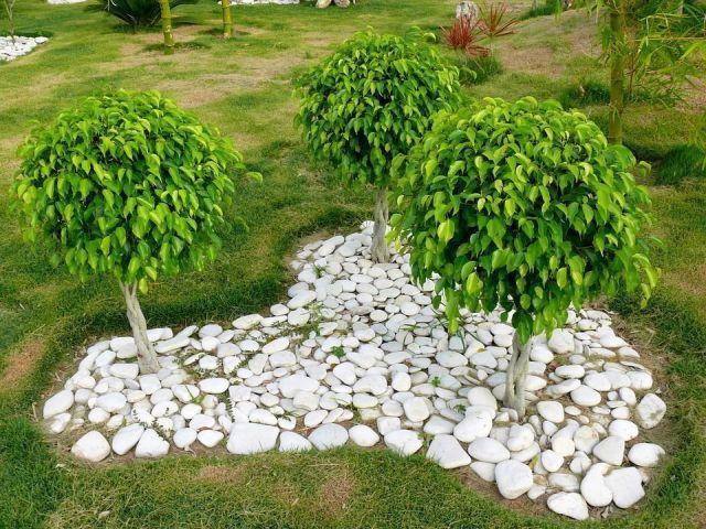 Plantas tronco decorativo