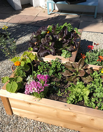 Young plants in raised beds