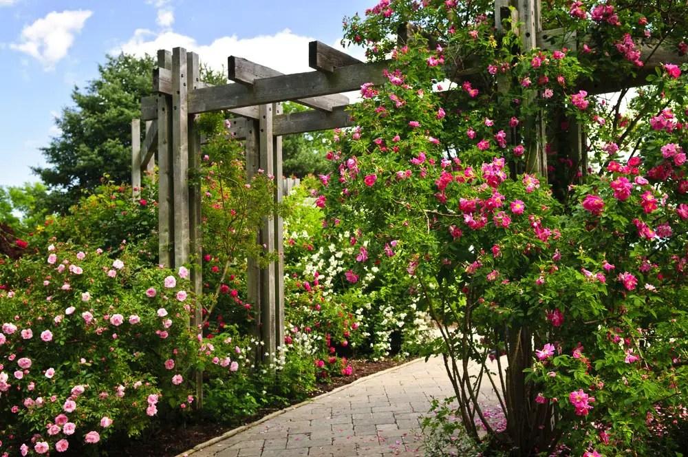 23 Super Cool Backyard Garden Ideas (PHOTOS) on Cool Backyard Decorations id=21707