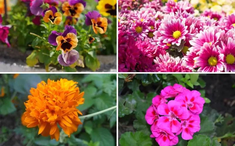 10 best plants for balcony gardens