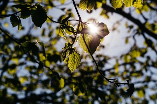 sunlight & gardening