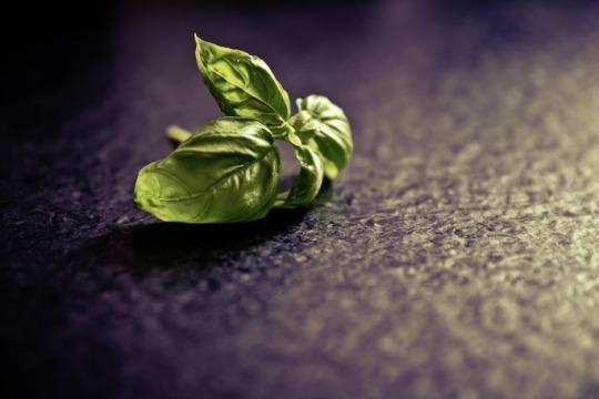 home-grown herbs