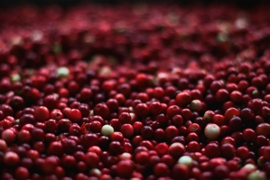 cranberries for thanksgiving traditions