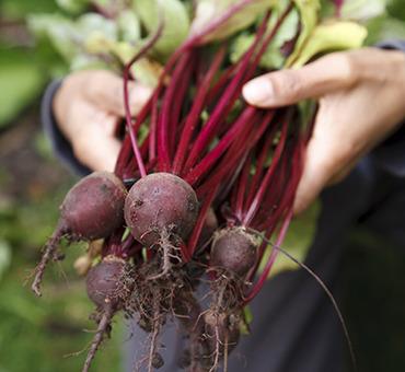 beets and basil