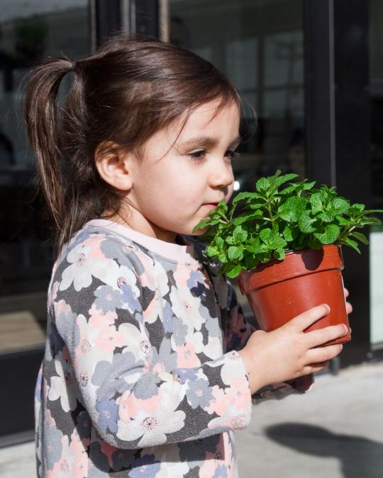 kid smelling herb