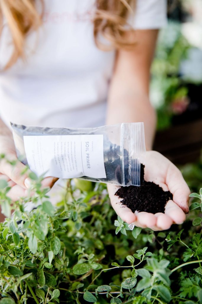 soil primer to grow successfully in the summer