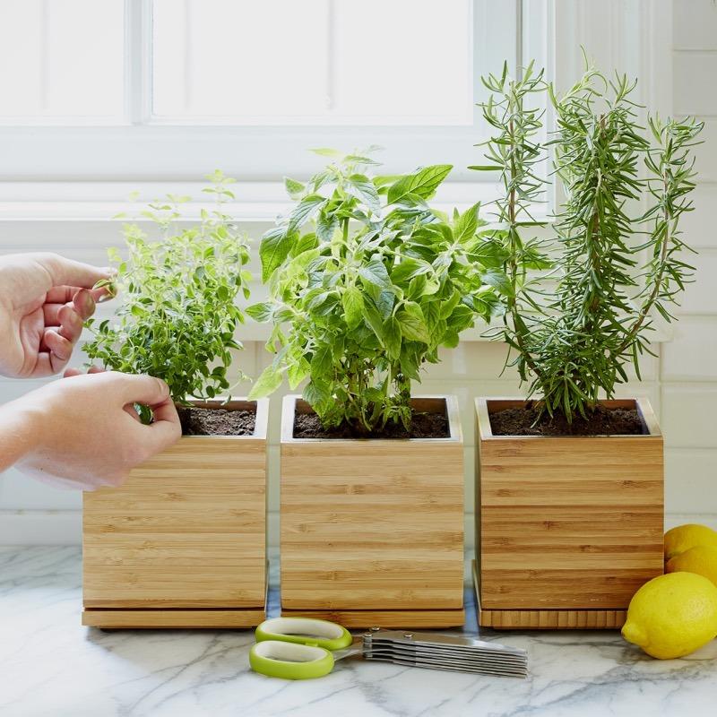 herbs cilantro mint rosemary