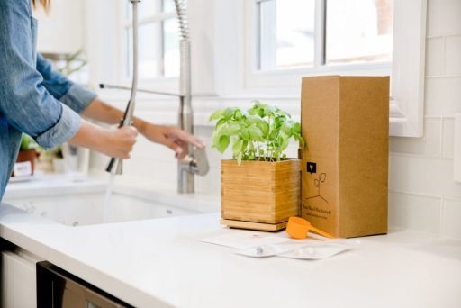 Basil Herb Bamboo Box