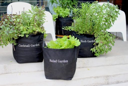 Fall Container Garden Vegetables