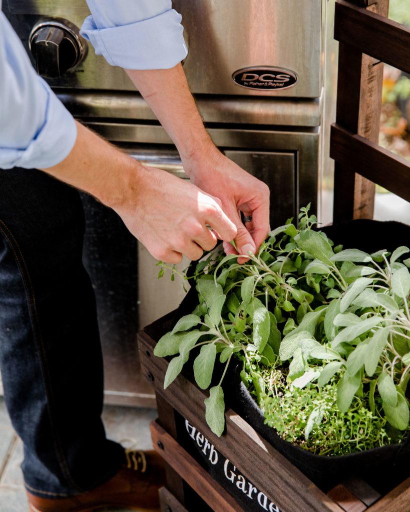 man harvesting herbs