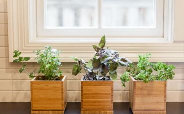 keep your herbs alive with sunlight