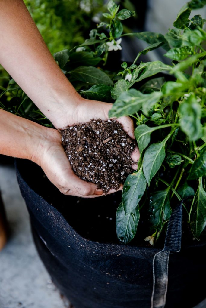 Dirt for Successful Container Garden