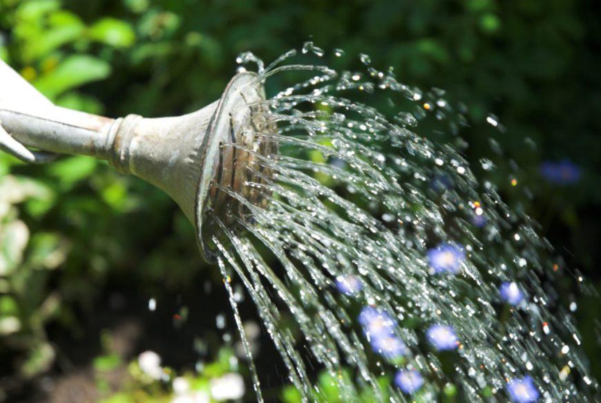 Watering Can Watering Flowers