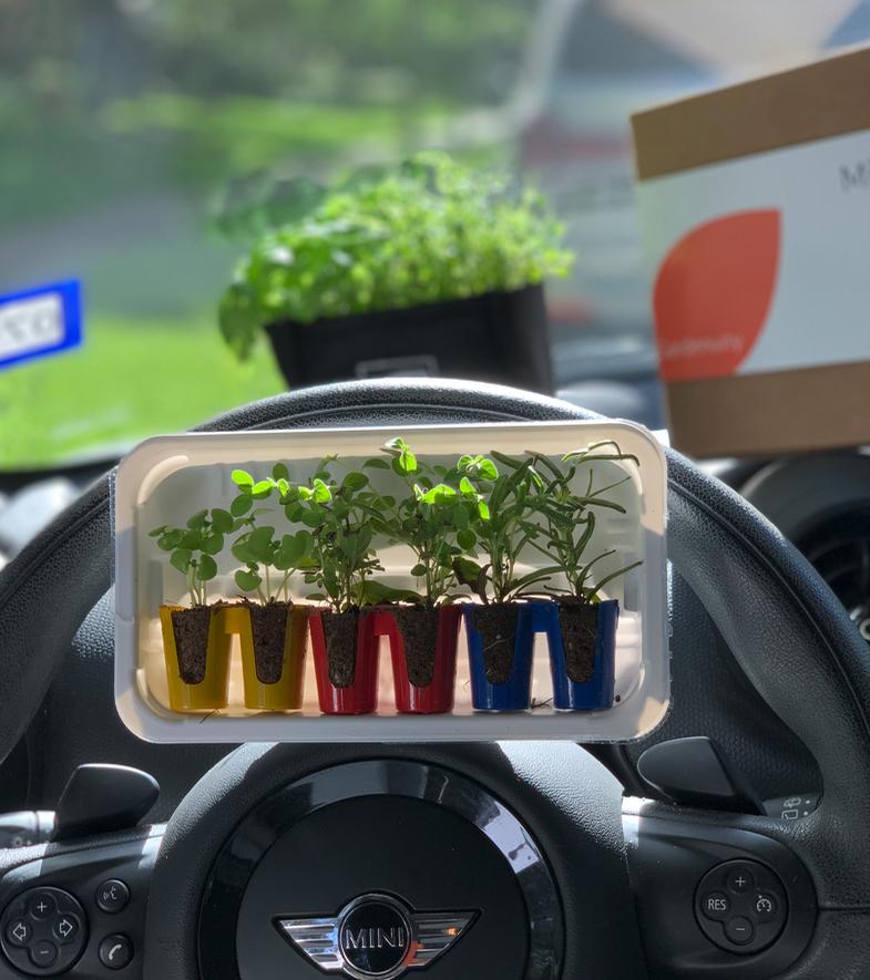 mini plants taken in a mini cooper