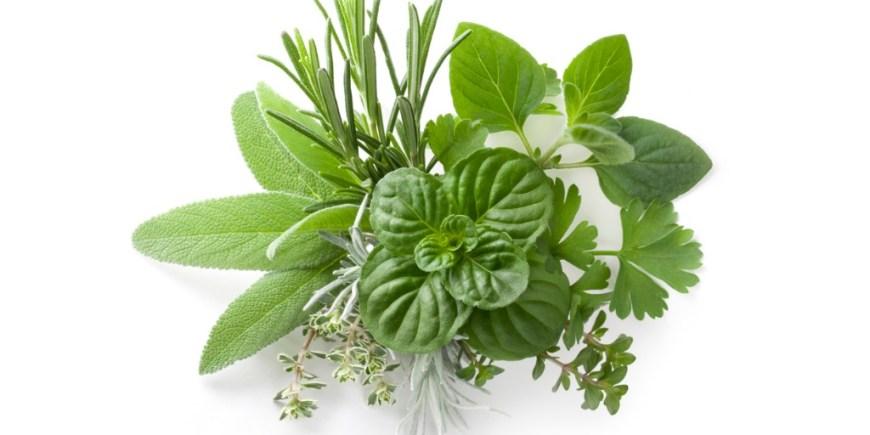 Mouthwatering Herb Bundle