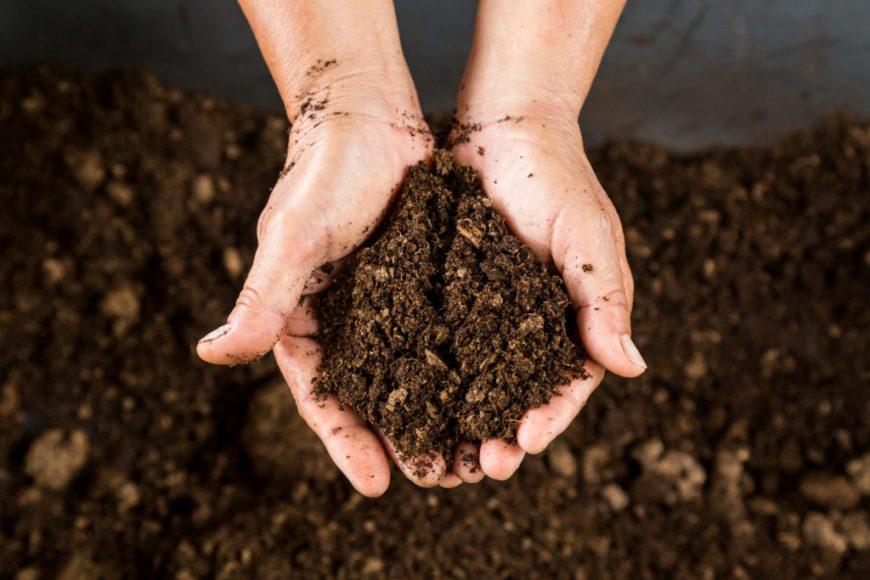 Soil: Garden soil vs potting soil