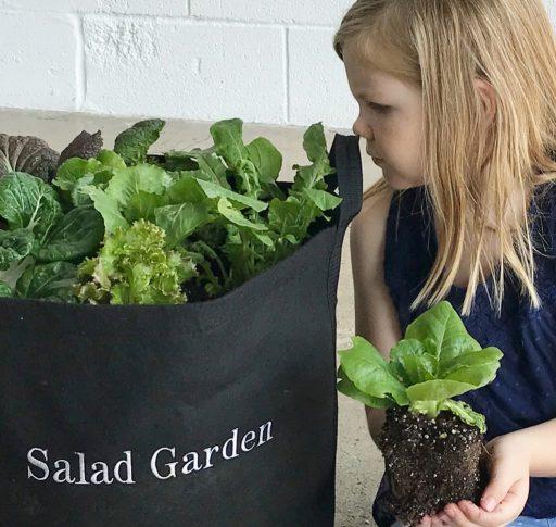 Planting Leafy Greens in Gardenuity Salad Garden
