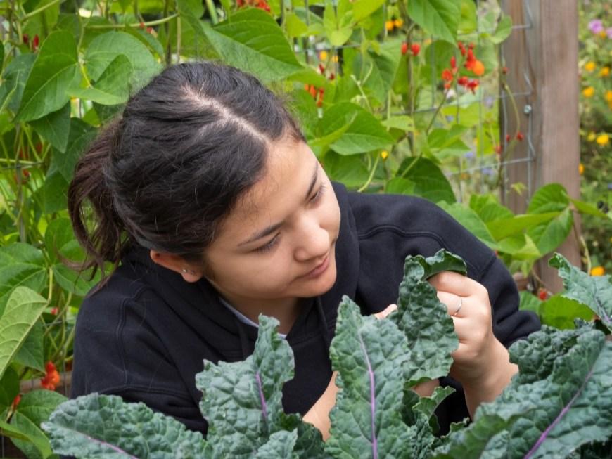 Gardener Harvesting Kale
