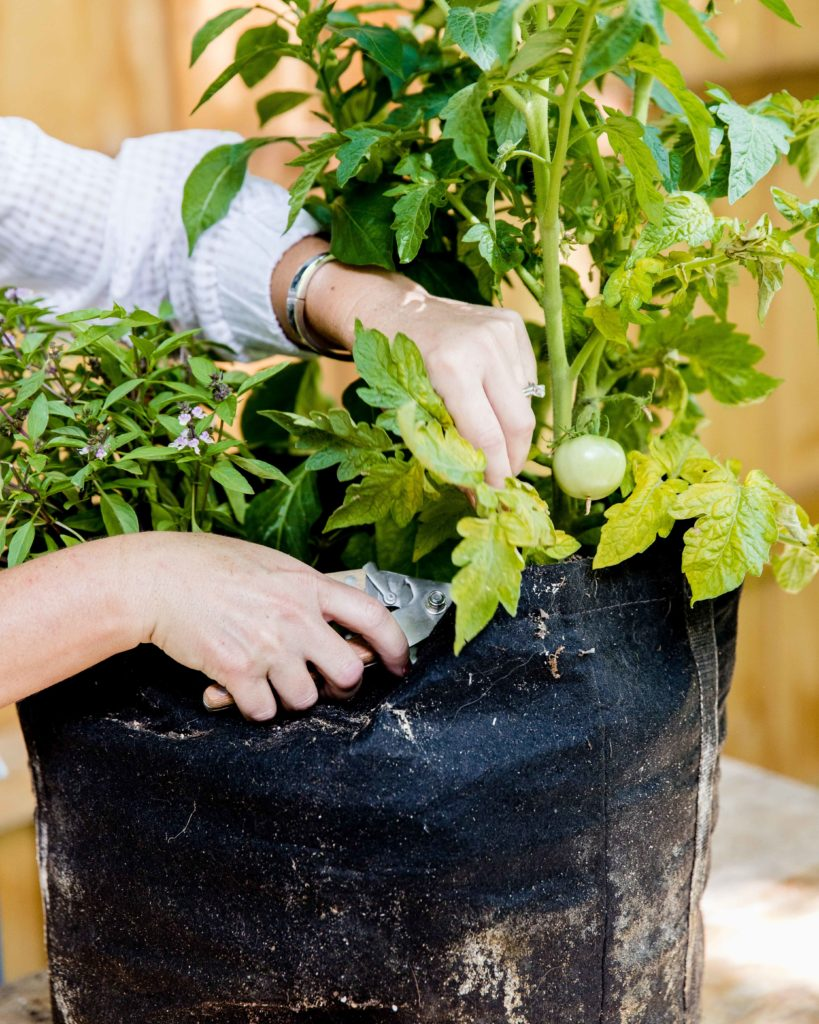 Herb Garden Maintenance how to