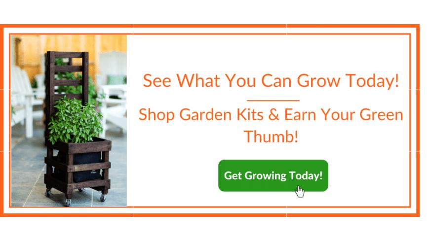 growing a container garden