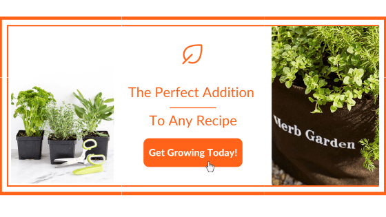 Roasted Tomato Salsa - Gardenuity Garden Kit
