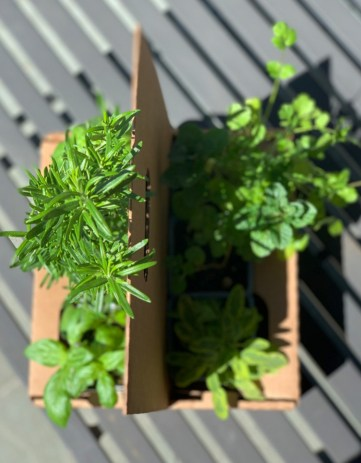 Plants for Container Garden