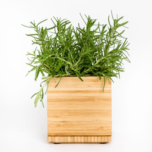 Gardenuity Rosemary Herb Box