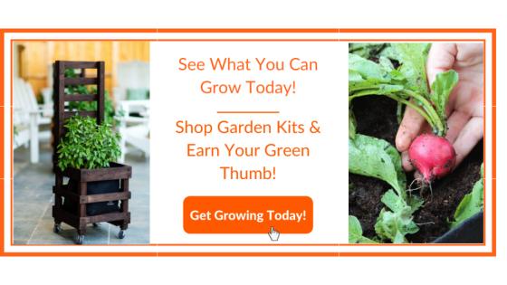 Radish Container Garden - Gardenuity
