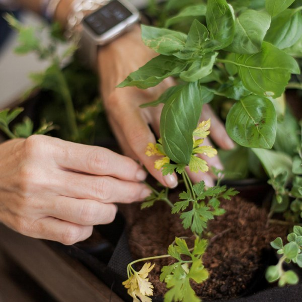 Gardening for a Digital Detox