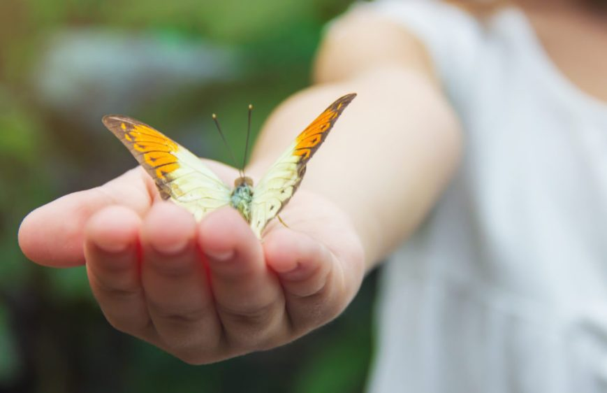Butterfly in Woman's Hand