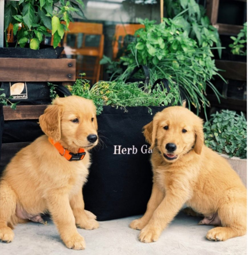 Best Gifts for a Dog Mom - Garden of Herbs