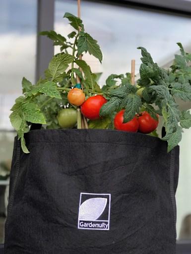 Fall Tomato Garden Kit