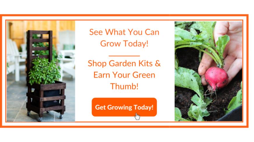 Radish Garden Kit