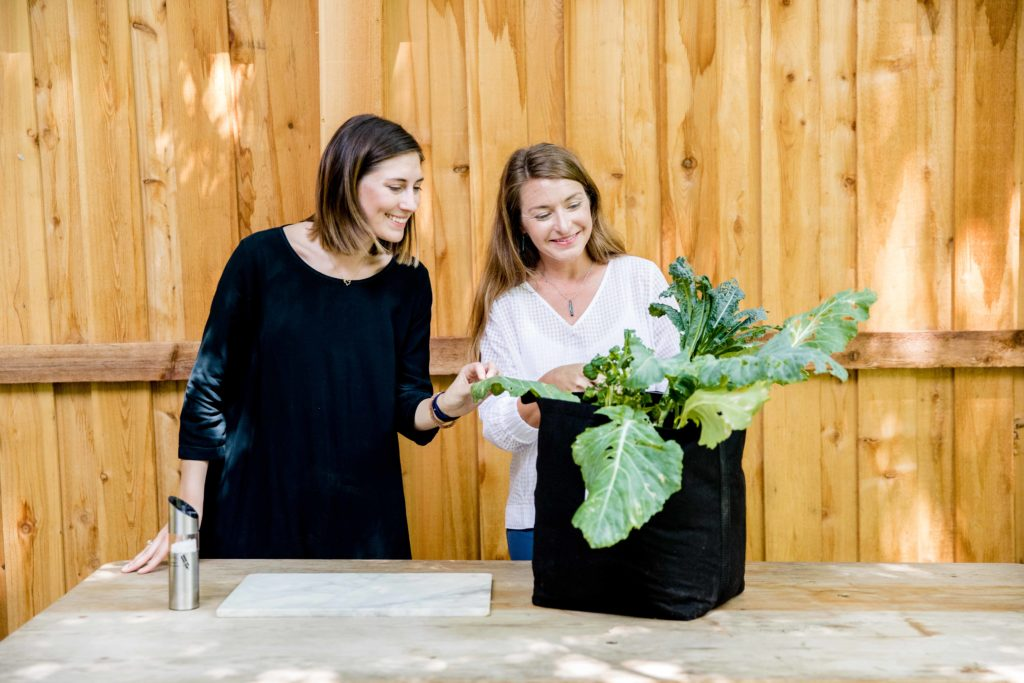 Growing Leafy Greens for The Fall Season | Gardenuity