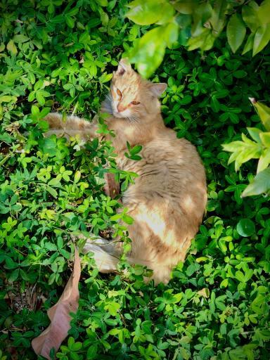 Cat Laying in Greenery