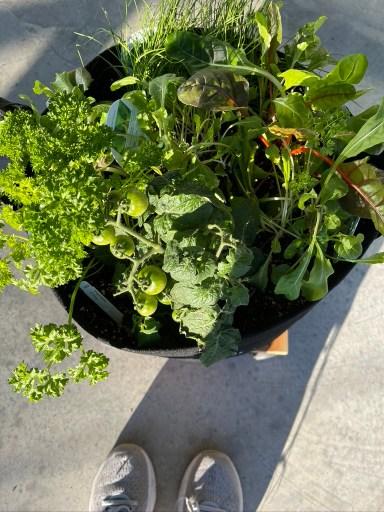 Herb and Veggie Garden