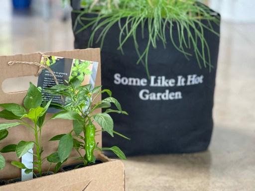 Gardenuity Shishito Pepper Garden