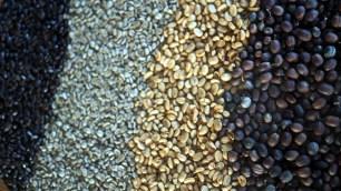 cyklus kávových zŕn