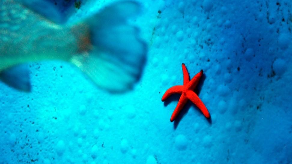 Pula: Aquarium