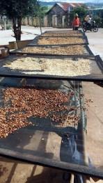 K'HO coffee farm: sušenie kávy