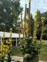 Mendlova zahrada