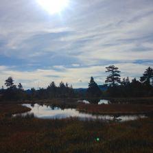 静かな湿原の池塘