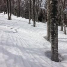 今年の後半ツリーは雪が走ってストップ皆無。楽チン&楽しい♪