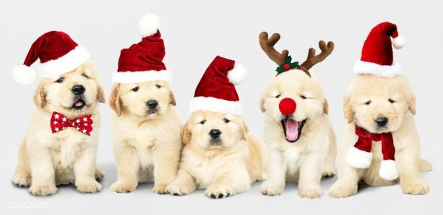 Puppy scams are wrecking the holidays