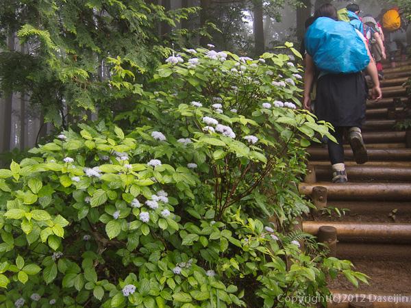 120701棒ノ嶺・尾根道に咲く花